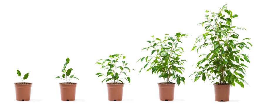 зрелость, жизненный путь, здоровое сознание, личное взросление, развитие личности, система человека, личностный рост, саморазвитие, как мы развиваемся, путь человека, найти себя