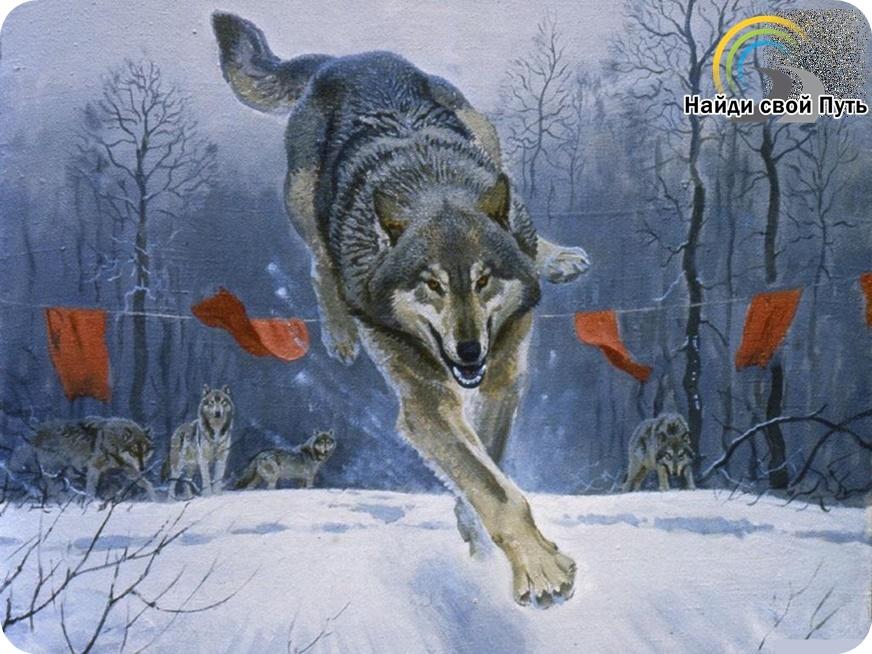 волк за красные флажки, вырваться за рамки, преодолеть ограничения, снять внутренние блокировки, внутренняя свобода