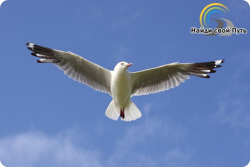 ричард бах, чайка по имени ливингстон, обрести свободу, как обрести внутреннюю свободу, как стать свободным, как найти свой путь, как перестать зависеть от других